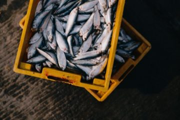Producer co-ops provide resources to fishermen