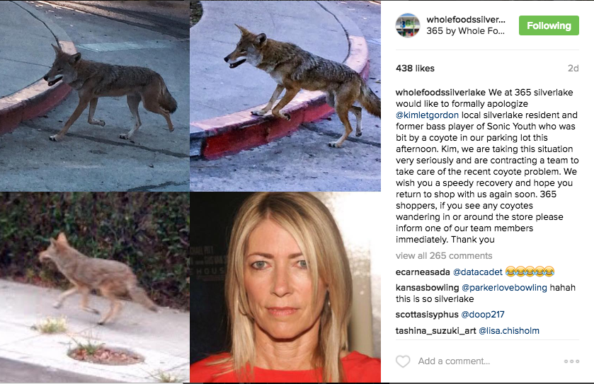 The store has inspired its own spinoff Instagram, which has been publishing fake stories about Sonic Youth bass player coyote attacks and Sleater Kinney bumper stickers