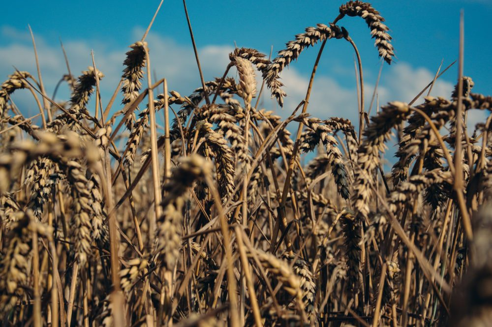 U.S. agricultural exports may not be the key to solving world hunger