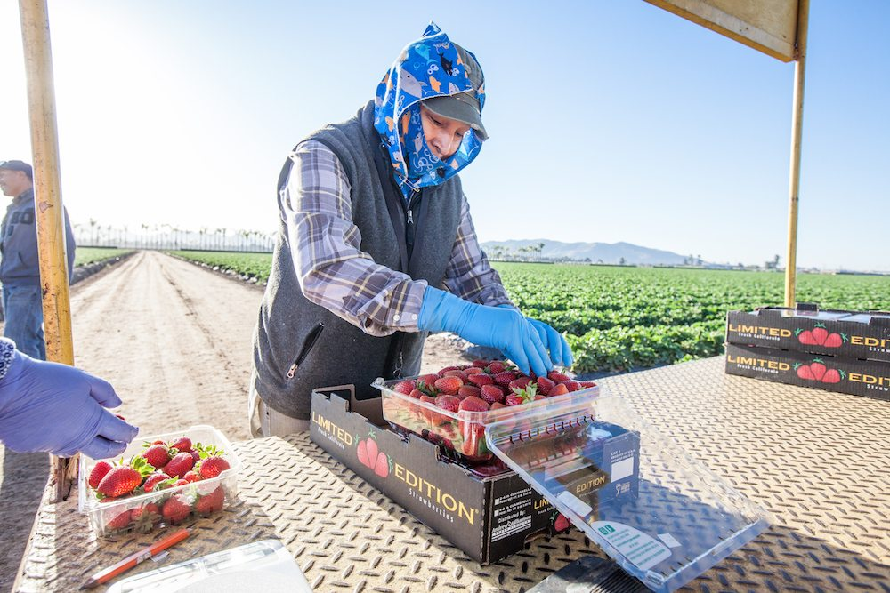 Audits guarantee that fair food standards are being upheld