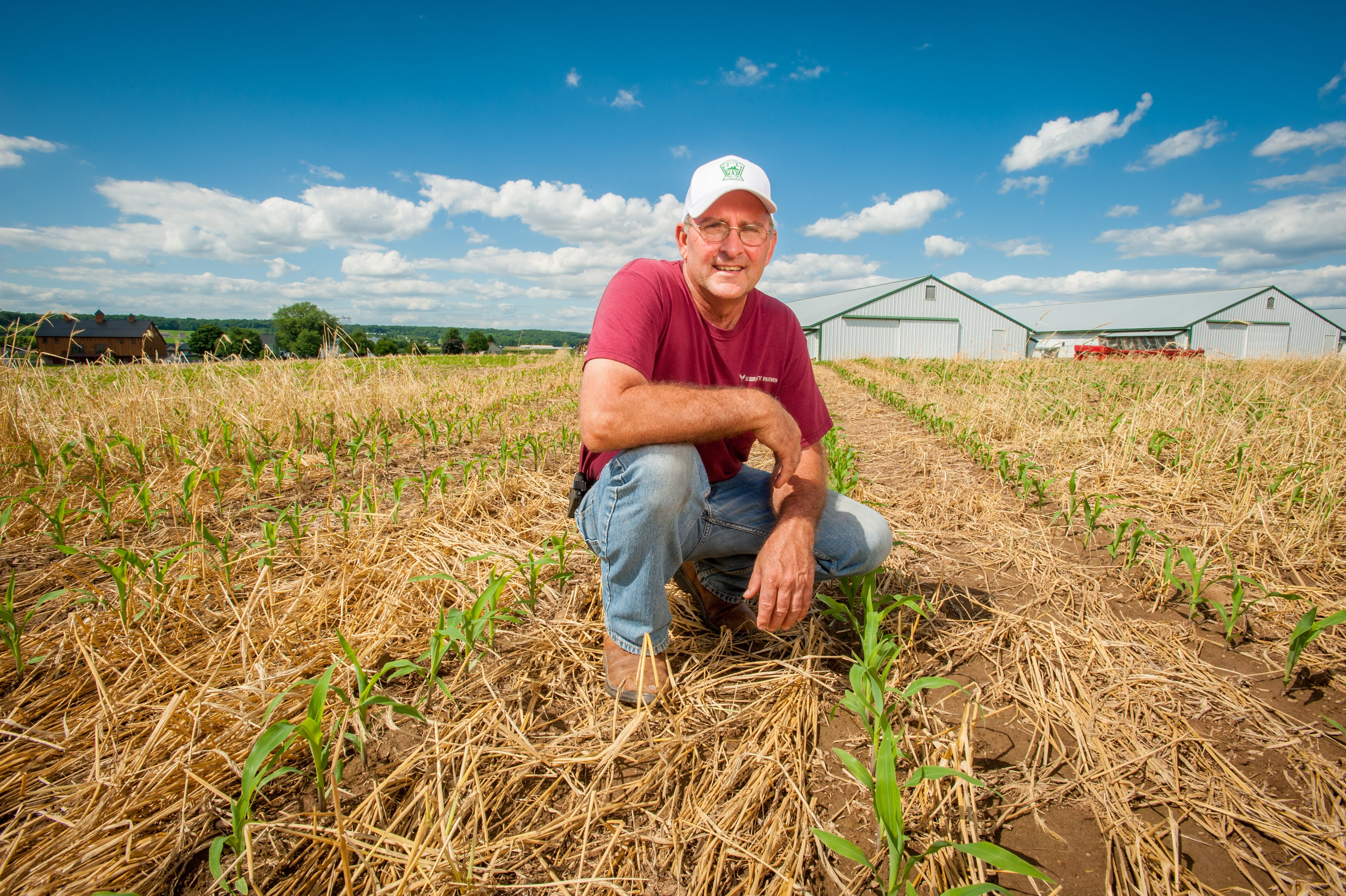 In Elizabethtown, PA Jim Hershey of Hershey Farms squats in a cornfield. The spring's corn crop can be seen emerging through the winter's cover crop residue