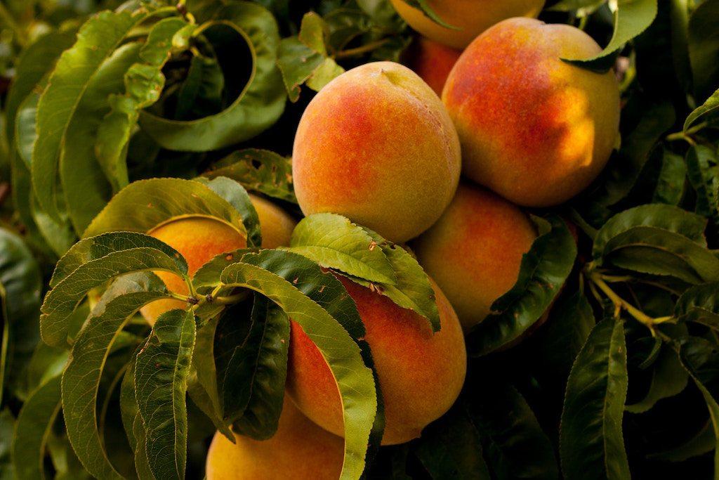 New Food Economy Latest News June 23