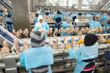 Workers in a chicken processing plant