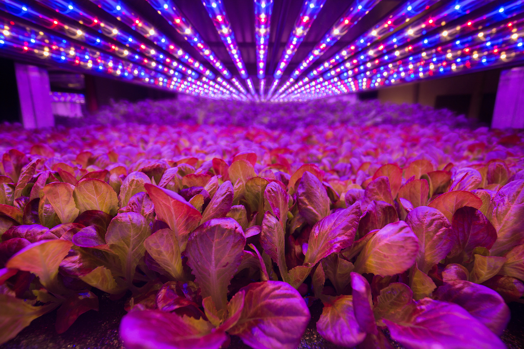neon lights at AeroFarms