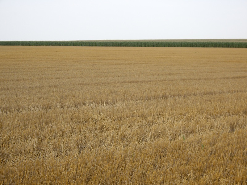 wheat stubble in rural kansas