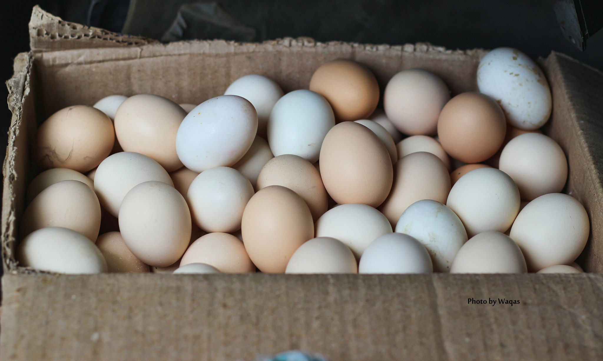 box of organic eggs