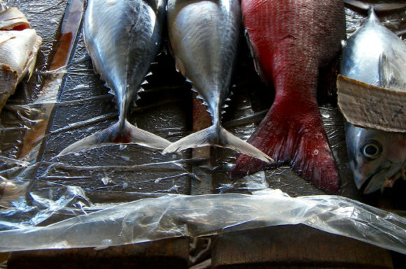 Thinly sliced: Should fish be knocked unconscious before they're killed for food?