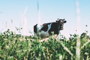 low-angle shot of a cow in the grass