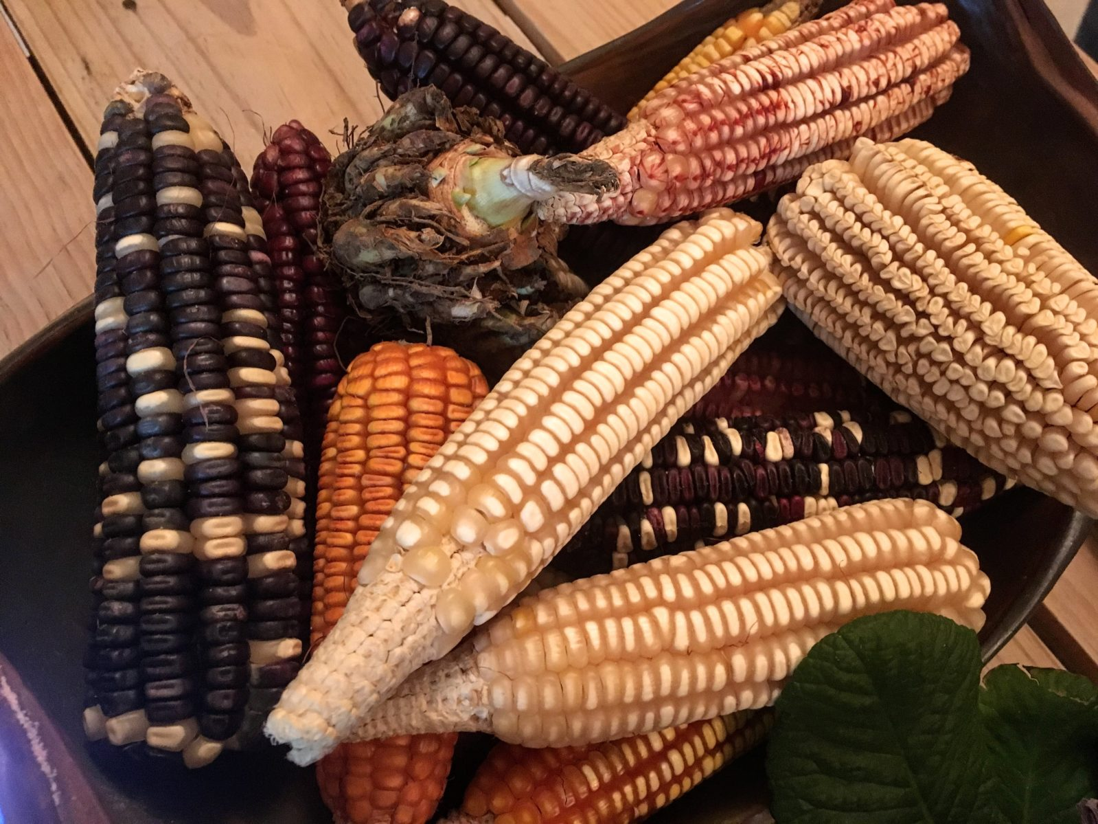 Heirloom corn picked from a small farm in Oaxaca, Mexico. Credit: Renée Alexander. July 2018.