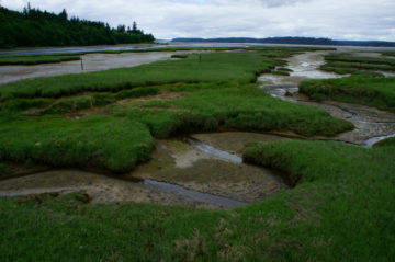 A federal court has restored the Obama-era Waters of the United States (WOTUS) rule, which expanded the powers of the existing Clean Water Act to put more wetlands and waterways under federal regulation. Credit: David Patte/U.S. Fish and Wildlife Service, August 2018