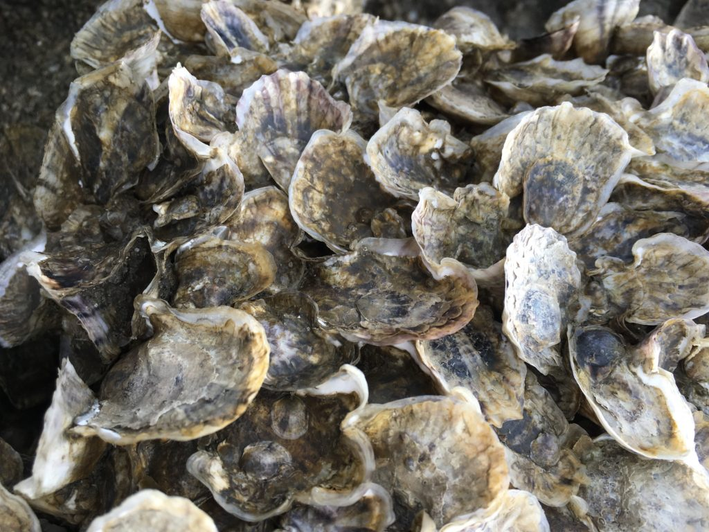 Oyster shells used to end up in landfill. Now, they're getting turned into  reef castles for baby oysters