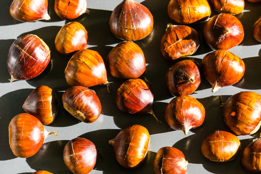 Scientists have developed a hybrid chestnut that can survive deadly fungal blight. But activists say that releasing it could infringe on indigenous sovereignty. Credit: Andrei Stanescu / iStock, April 2019
