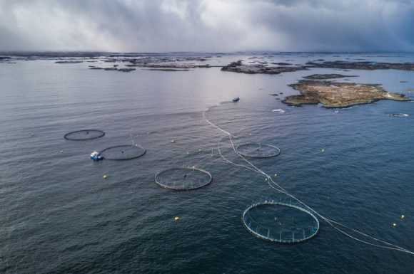 The aquaculture industry is trying to take fish out of fish food. Are microalgae the solution?