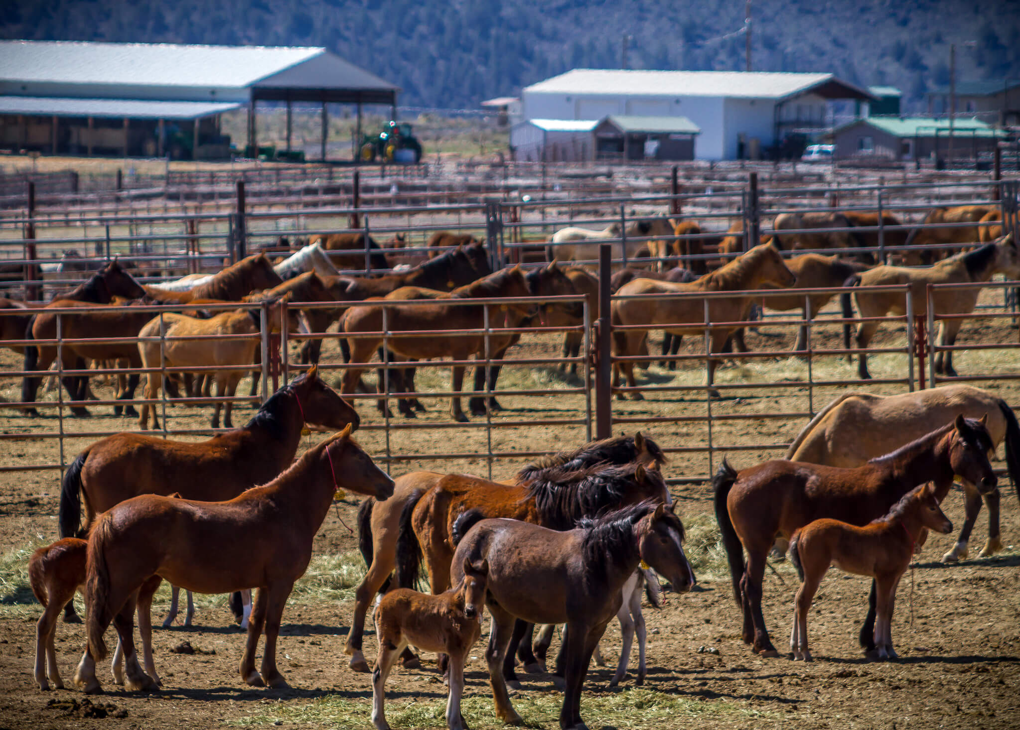 Wild horse herds expand by 15 to 20 percent per year. Above, a corral in Hines, Oregon