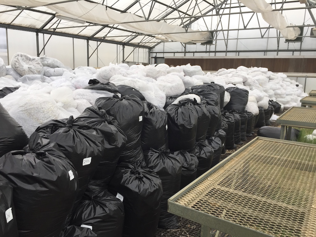 Bagged paper stored in greenhouse