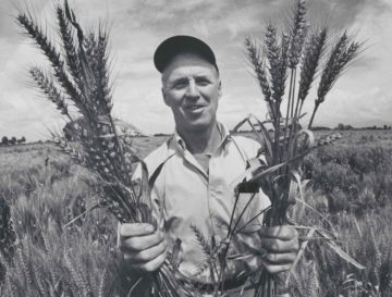 man who tried to feed the world Norman Borlaug with wheat april 21 2020