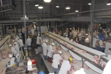 Meat processing plant workers at a slaughterhouse in Texas