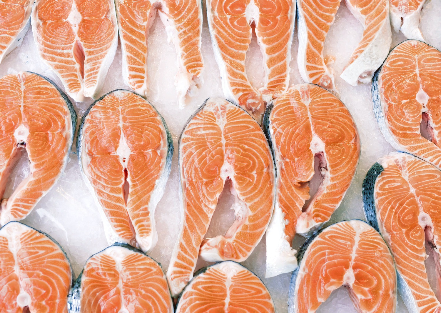 Rows of salmon fillets on ice. August 2020