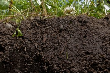 healthy, rich soil with plants on top. September 2020