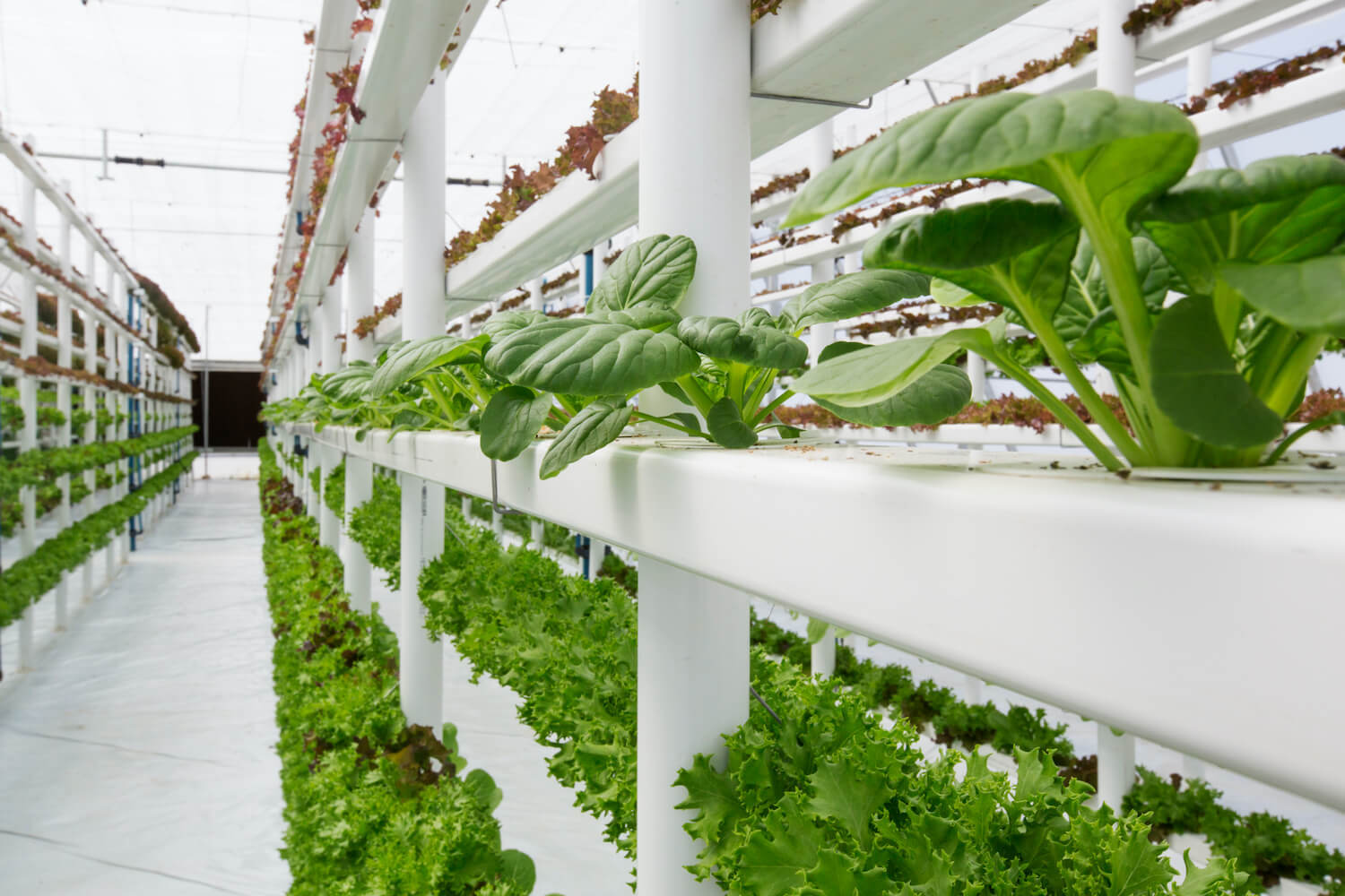 An indoor farm, utilizing hydroponics and vertical farming to maximise production and minimize water usage. September 2020
