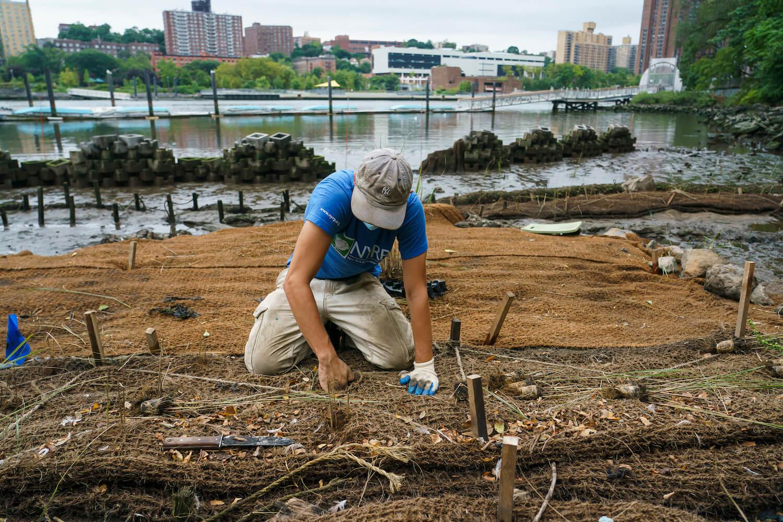 A man building a green barrier oyster reef. December 2020