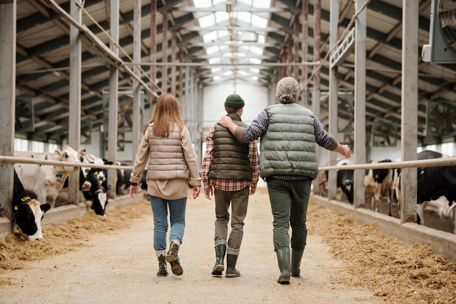 Rear view of father pointing at cows and sharing farm experience with son, whole family walking along cowshed together. January 2021