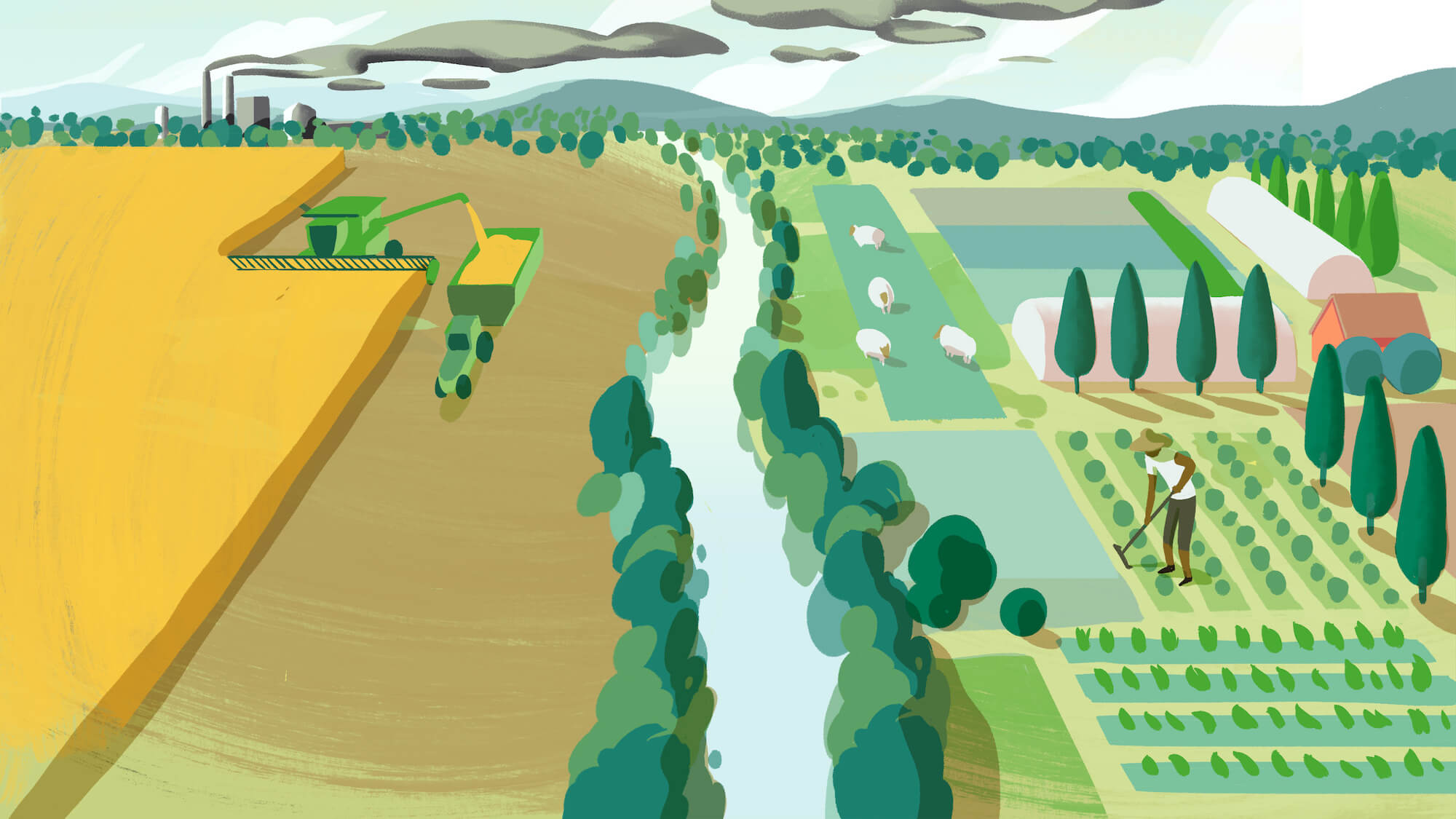 Illustration of a conventional grain farm across from a farm using the principles of regenerative agriculture (May 2021)
