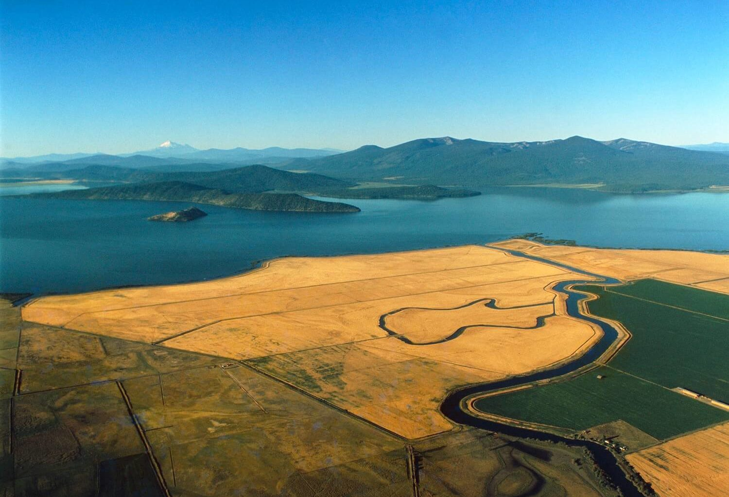 Aerial view of wheat fields along the shores of Klamath Lake - Oregon, United States of America. May 2021