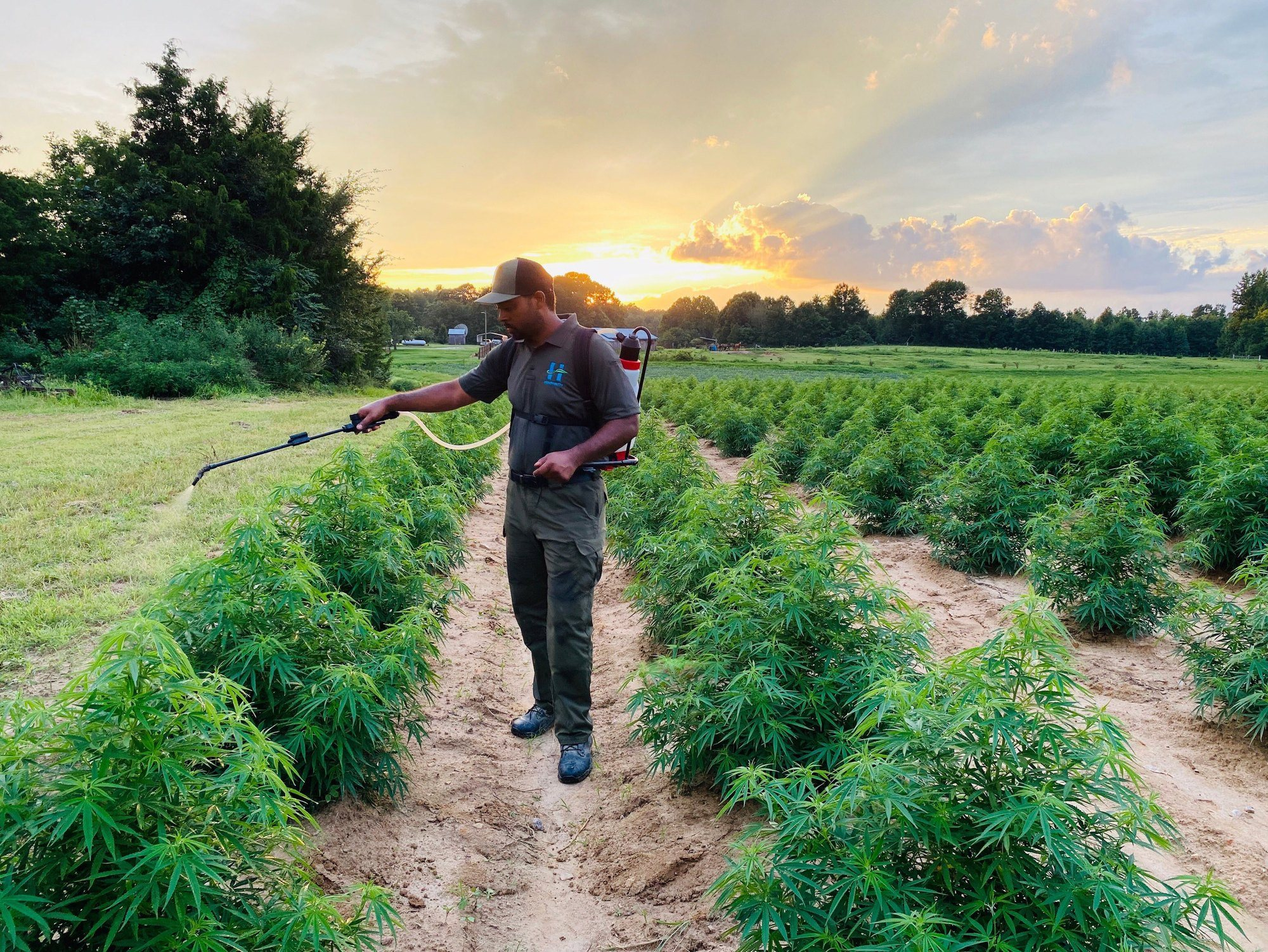 Patrick Brown at Brown Family Farms in North Carolina spraying pesticides on hemp plants. September 2021